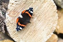 Papillon Bois Insecte