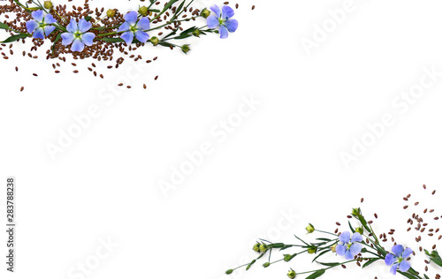 Obraz Capsules with seed flax and flowers ( Linum usitatissimum, common flax or linseed ) on a white background with space for text. Top view, flat lay - fototapety do salonu