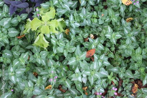 green leafy plants in garden