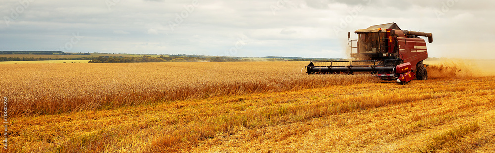 Fototapeta Panoramic view at combine harvester working on a wheat field. Harvesting the wheat. Agriculture. Panoramic banner.