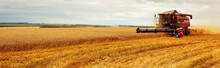 Panoramic View At Combine Harvester Working On A Wheat Field. Harvesting The Wheat. Agriculture. Panoramic Banner.