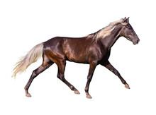 Silver-black Horse Breed Rocky...