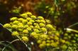 Blüten – Blätter – Pflanzen in der freien Natur bei einer Fotowanderung südlich von La Matanza fotografiert.