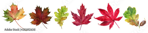 Autumn foliage watercolor isolated on white background Fotobehang