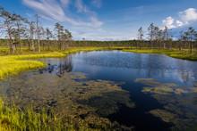 Viru Bog In Lahemaa National Park; Estonia