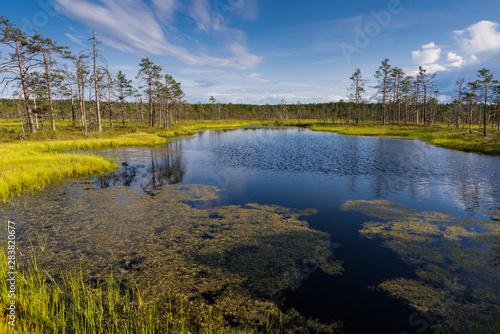 Fotografia Viru bog in Lahemaa National Park; Estonia