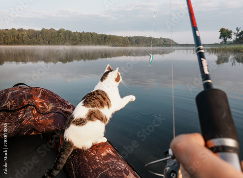 Fotografie, Obraz  Domestic cat enjoys freedom outside the house on fishing with owners in the early morning in nature