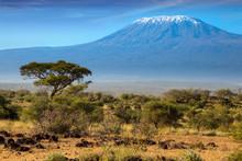 The Kilimanjaro