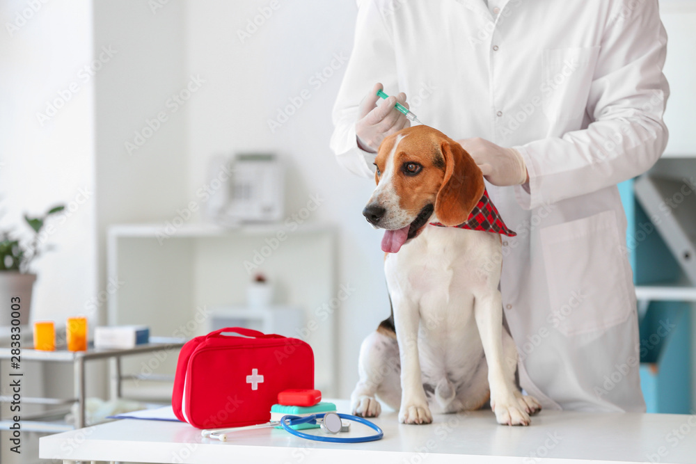 Veterinarian vaccinating cute dog in clinic