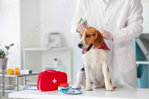 mata magnetyczna Veterinarian vaccinating cute dog in clinic