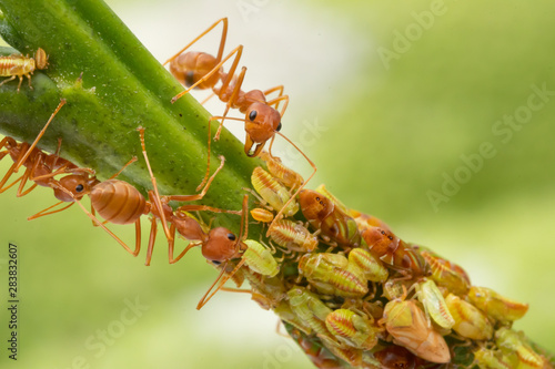 Photo Ants and leafhopper on green tree over natural background concept for  pesticdes