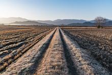 霜の朝の農道