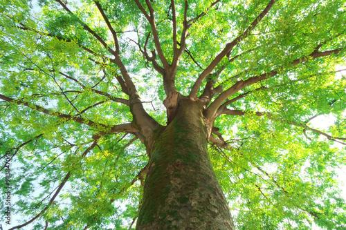 Foto 大樹の緑と木漏れ日