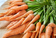 Freshly Picked Bunch Of Carrots