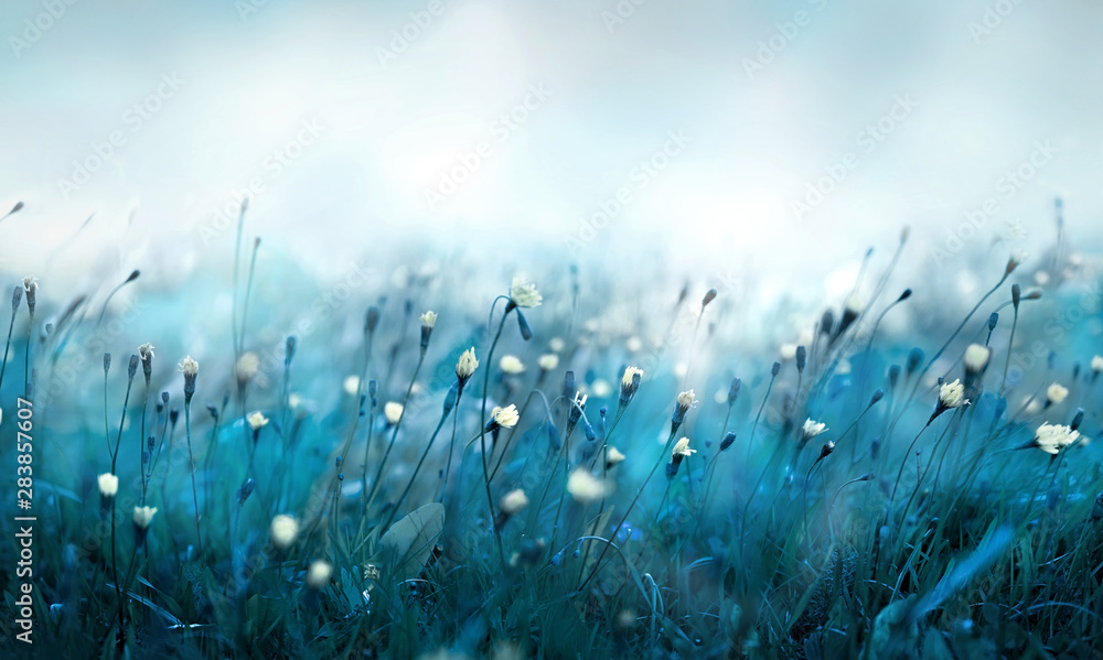 Fototapety, obrazy: Misty morning in the meadow.