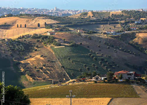 Panoramic view of olive groves and farms on rolling hills of Abruzzo Wallpaper Mural