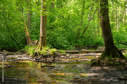 Fototapeten Wald Sumpf im wald