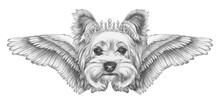Portrait Of Yorkshire Terrier Dog With Wings. Hand-drawn Illustration.