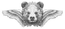 Portrait Of Bear With Wings. Hand-drawn Illustration.