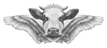 Portrait Of Cow With Wings. Ha...