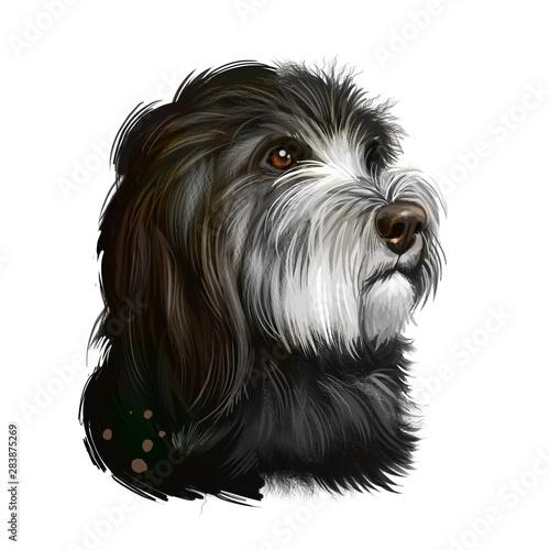 Foto  Catalan Sheepdog dog breed isolated on white background digital art illustration