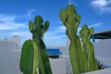 Cactus Et Maisons Blanches Devant La Mer.