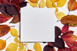 Leinwanddruck Bild - Autumn composition. Frame made of blank paper and leaves on white background. Fall concept. Autumn thanksgiving texture. Flat lay, top view, copy space