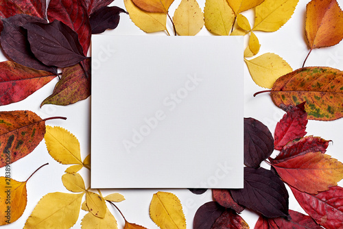 Autumn composition. Frame made of blank paper and leaves on white background. Fall concept. Autumn thanksgiving texture. Flat lay, top view, copy space