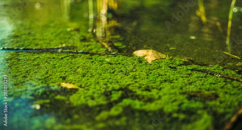 Ecological crisis. Swampy river Tablou Canvas