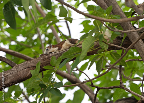 Fotografie, Obraz  Close up Squirrel on Tree Branch Isolated on Background