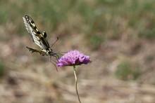 Farfalla In Bilico Sul Fiore
