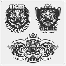 Emblems With Angry Tigers. Tattoo Salon And Sport Club Logos. Print Design For T-shirt.