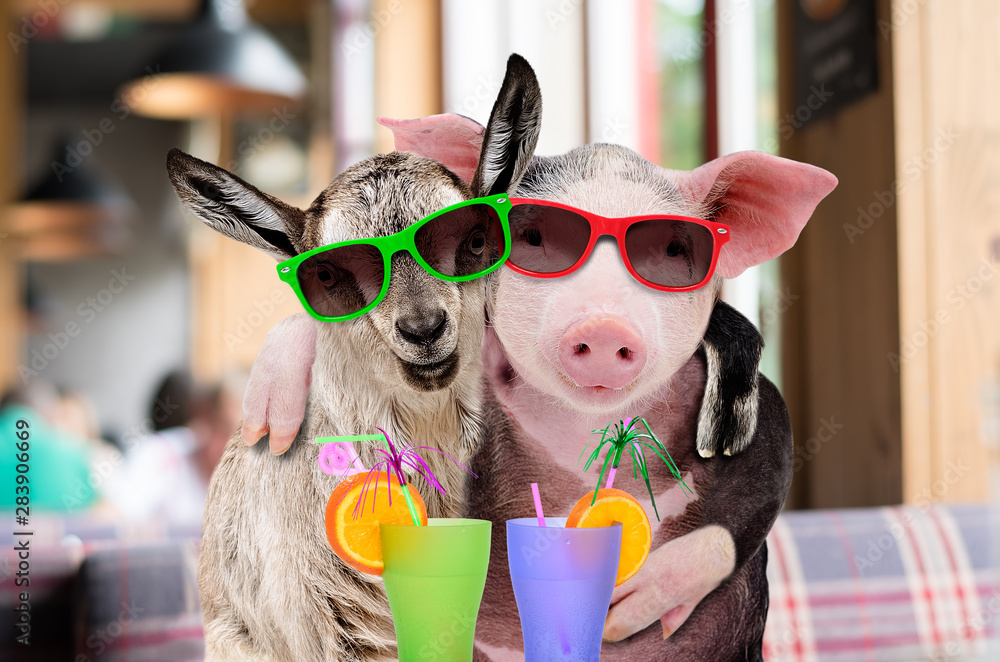 Pig and goat in sunglasses hugging while sitting in a cafe with cocktails