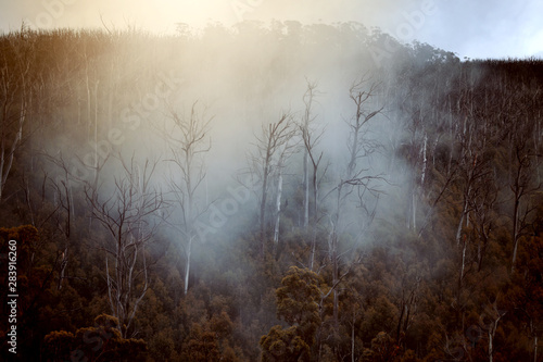 Photo Stands Fantasy Landscape Regenwald in Australien mit Nebel