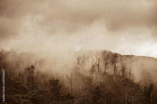 Spoed Foto op Canvas Fantasie Landschap Regenwald in Australien mit Nebel