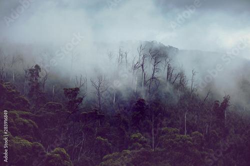 Foto auf AluDibond Fantasie-Landschaft Regenwald in Australien mit Nebel