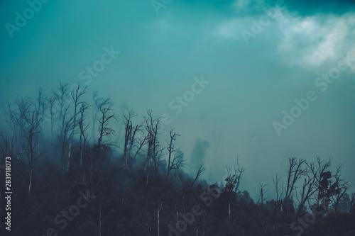Spoed Foto op Canvas Fantasie Landschap Regenwald Wald mit Nebel in Australien