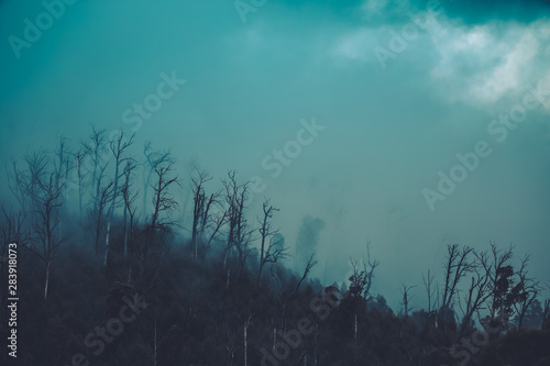 Poster de jardin Fantastique Paysage Regenwald Wald mit Nebel in Australien