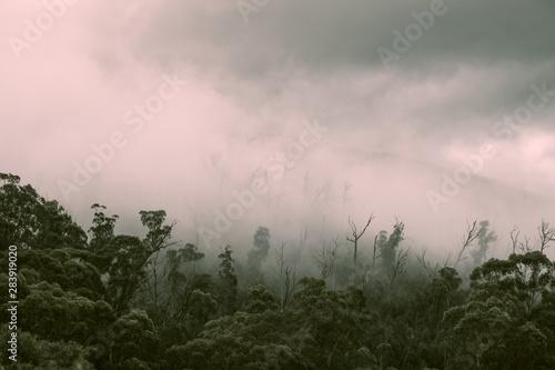 Montage in der Fensternische Fantasie-Landschaft Regenwald Wald mit Nebel in Australien