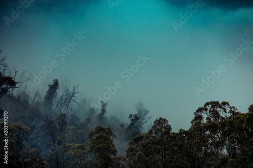 Wall Murals Fantasy Landscape Regenwald Wald mit Nebel in Australien