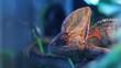 Chameleon red and orange in terrarium close-up reptile