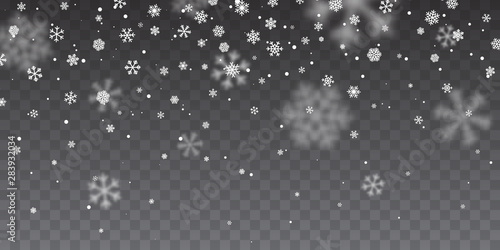 Obraz Christmas snow. Heavy snowfall. Falling snowflakes on transparent background. White snowflakes flying in the air. Vector illustration - fototapety do salonu