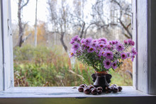Aster Bessarabicus Decorative Ornamental Plant. Bouquet Of Autumn Flowers. Beautiful Purple Asters In Ceramic Vase On The Wooden Window Sill Of The Old Rural House.