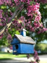 Birdhouse On The Boulevard