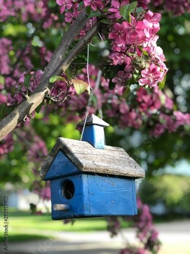 Fotografering birdhouse on the boulevard