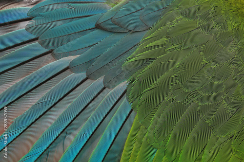Fototapeta Beautiful parrot feathers background, Nature background and texture obraz