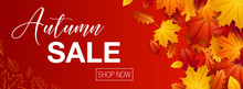 Autumn Sale Background Banner ...