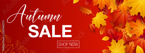 Fototapeta Autumn sale background banner with autumn fall maple leaves obraz