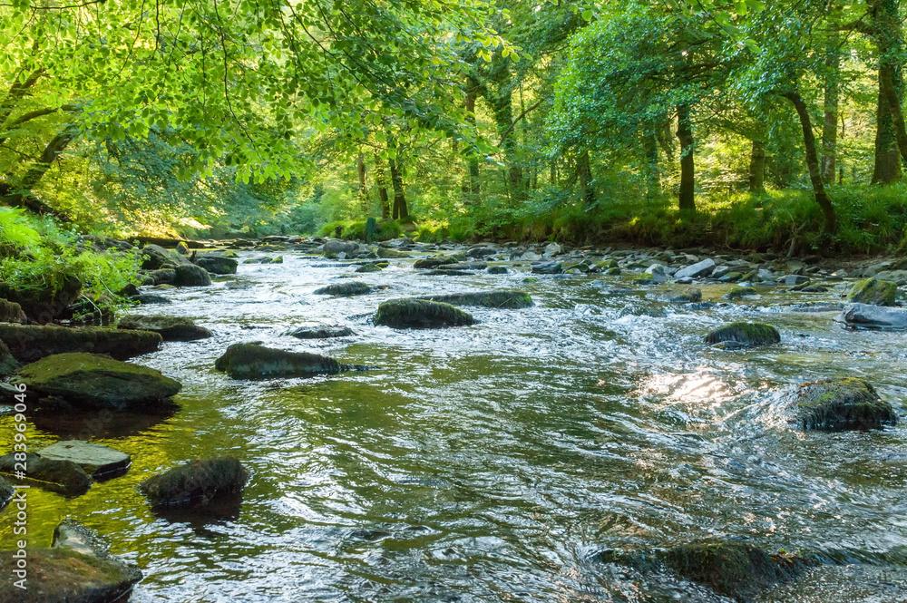 Fototapety, obrazy: Along the river Barle in Tarr Steps Woodland