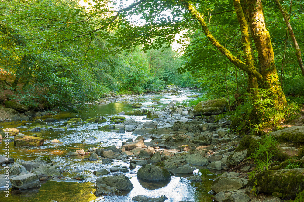 Fototapety, obrazy: Along the river Barle in Tarr Steps Woodland